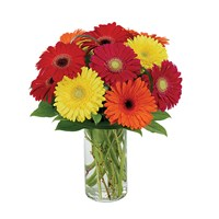 """Gerberas Galore"" flowers (BF186-11KM)"